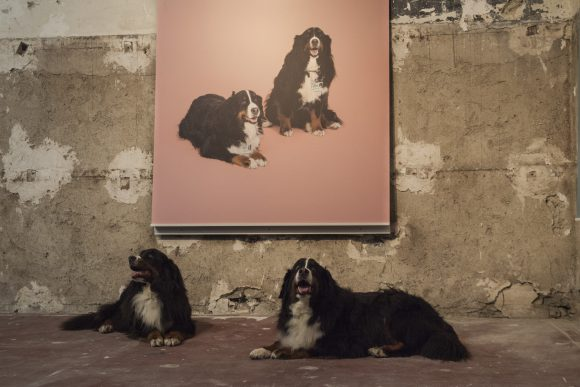 Kiku and Kuki, Claude Nobs' bernese moutain dogs in front of their portrait by Yann Gross, at the Ferblanterie. Photo © Diana Martin / Festival Images Vevey 2016